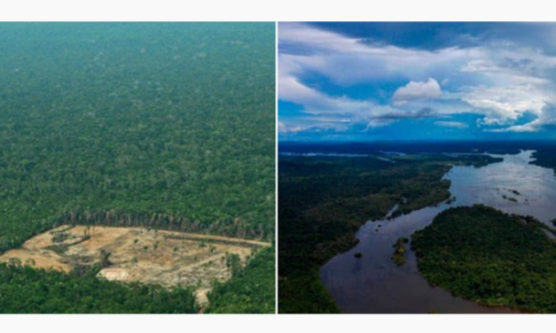 "Scientists Warn Amazon Is Reaching Deforestation ""Tipping Point"""