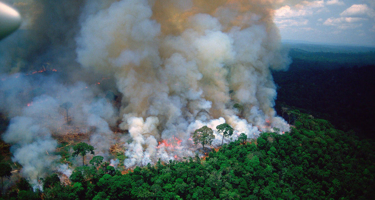 The Amazon Fires and the Dawn of Environmental Interventions