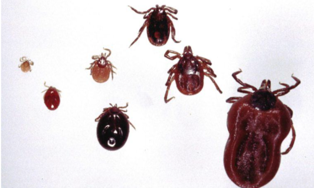 Congressman claims evidence links Lyme disease to US military bioweapons research //  Lyme Disease, Nazi Scientists, and Biowarfare