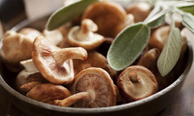 Mushrooms really are magic, especially when it comes to brain health