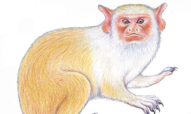 New monkey species discovered in the Amazon's 'arc of deforestation'