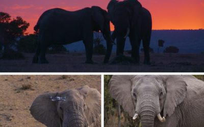 Protecting Kenya's Elephants from Above
