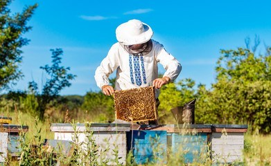 The Basics of Beekeeping For Beginners