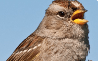 NOT JUST THE BEES, FIRST-OF-ITS-KIND STUDY SHOWS NEONICS MAY BE KILLING BIRDS TOO