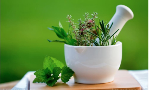 Which herbal medicines work against the flu? A scientific review provides answers