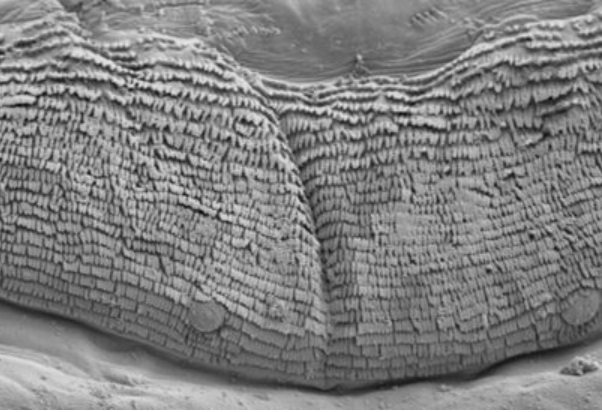 Finding design everywhere: When maggots fly, and more