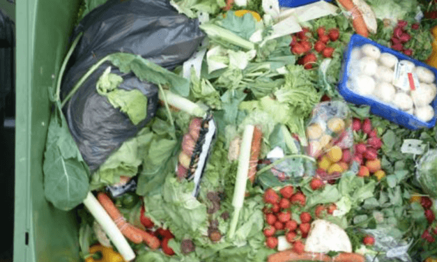 Waste in America: Statistics and facts on food & water